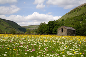 Hay Meadows in the Yorkshire Dales